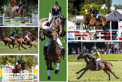 Jumping-Polo Collage.PNG